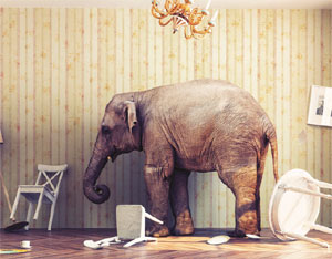 Elephant in the room image