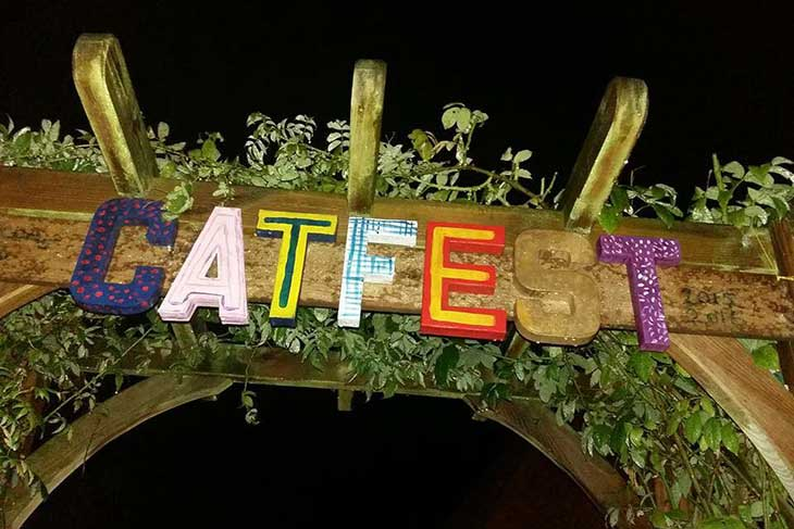 Catfest image