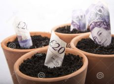 Growing money in pots image