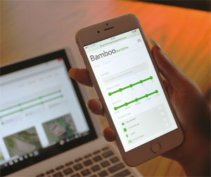 Bamboo on mobile device image