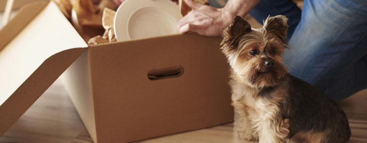 model tenancy pets