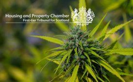 tribunal cannabis plant image