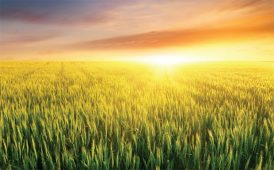 Agricultural land image