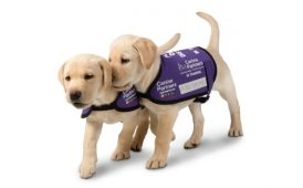 Canine Partners image