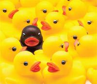 Multiple ducks image